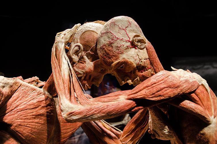 Spraakmakende expositie van Body Worlds