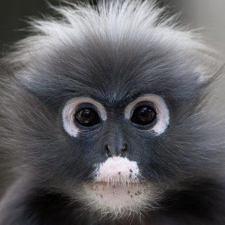 Prachtige dieren in een unieke omgeving in Burgers Zoo