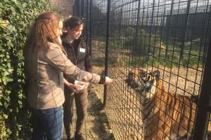 Zelf de tijgers voeren tijdens de tijger workshop
