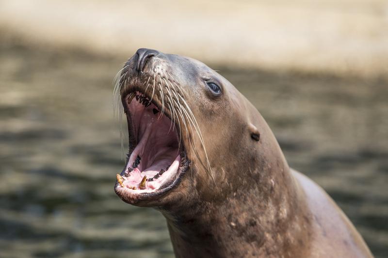 Bekijk de ondeugende zeeleeuwenshow in het Dolfinarium in Harderwijk