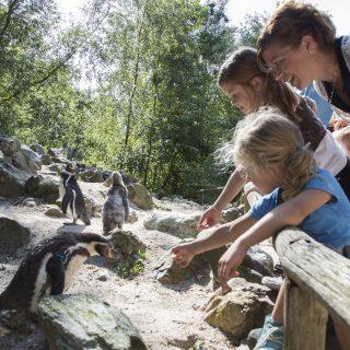 Familiepark AquaZoo in Leeuwarden