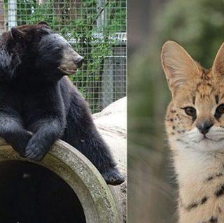 Exotischer dieren in Dierenpark Zie-ZOO