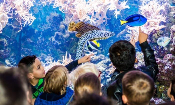 4 aquariums in Het Arsenaal in Vlissingen.