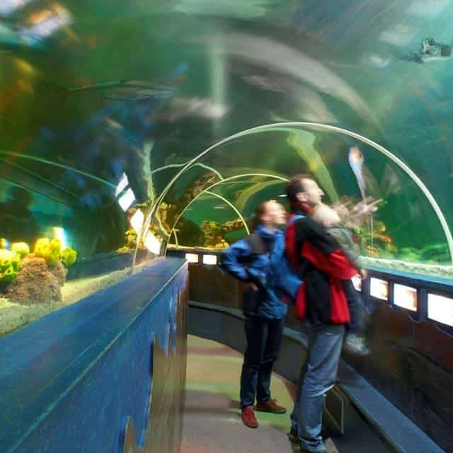 Onderwatertunnel in Sea Life Scheveningen.