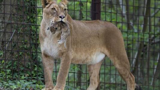 4 leefgebieden met een diversiteit aan dieren in GaiaZOO