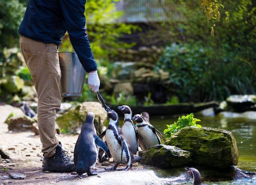 Pinguïns in Vogelpark Avifauna
