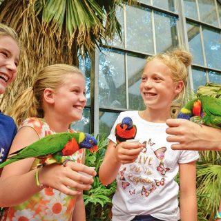 Exotische vogels bekijken in Vogelpark Avifauna