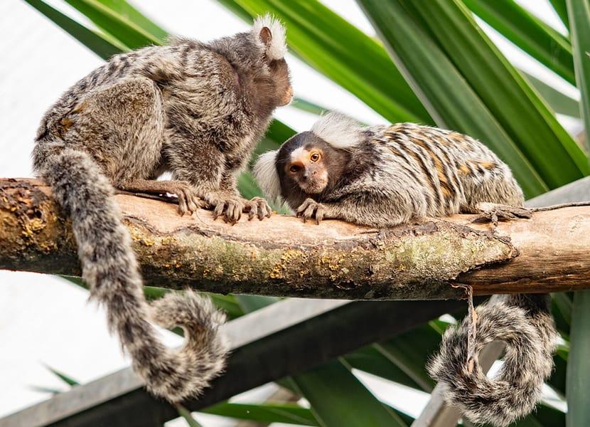 Almere Jungle Dierenpark is een dierentuin, zorginstelling en botanische tuin in één