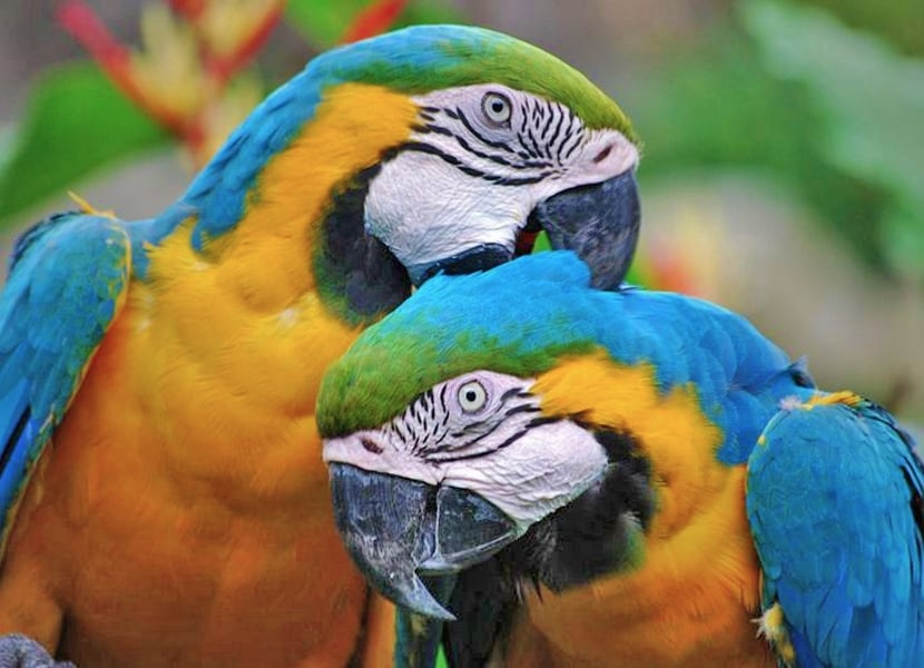 Alles over papegaaien in Zoo Veldhoven