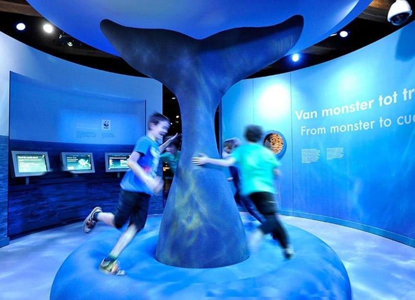 Leer alles over walvissen in het scheepvaartmuseum Amsterdam