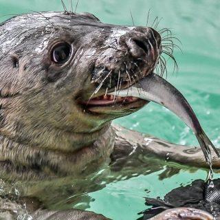 Het centrum voor zeehonden Pieterburen