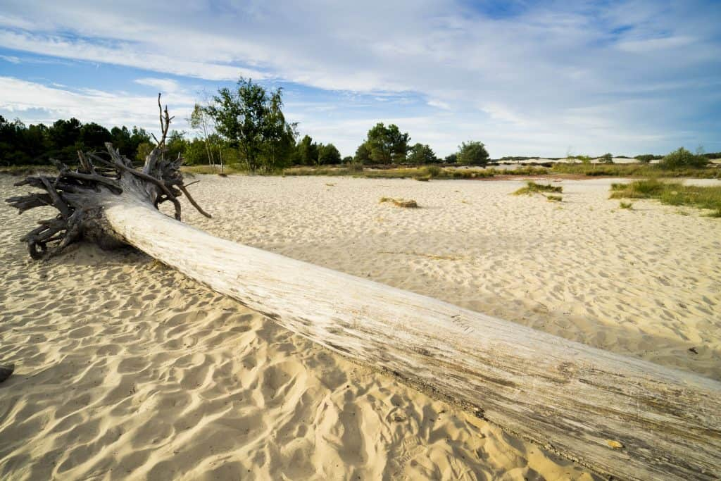 Loonse en Drunense duinen in Brabant